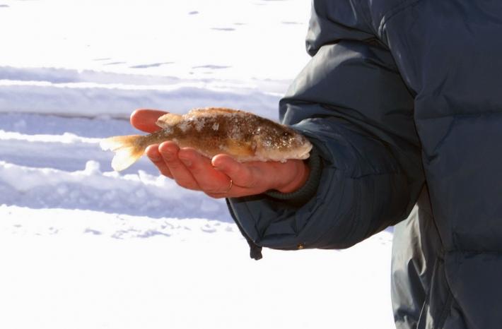 самая крупная рыба